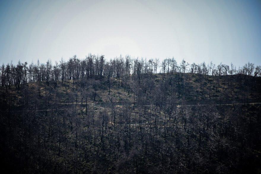 Εύβοια: Εικόνες απόλυτης καταστροφής στο δάσος μετά τη φωτιά(Φωτ.+video)