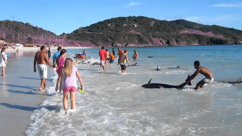 Προσοχή! Τι απαγορεύεται να κάνεις αν δεις ένα δελφίνι στην στεριά(video)