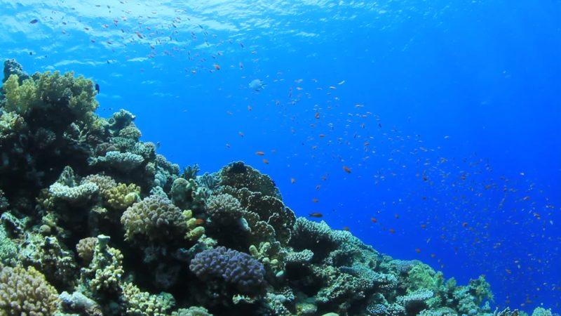 Η απόλυτη ησυχία του υποβρύχιου κόσμου