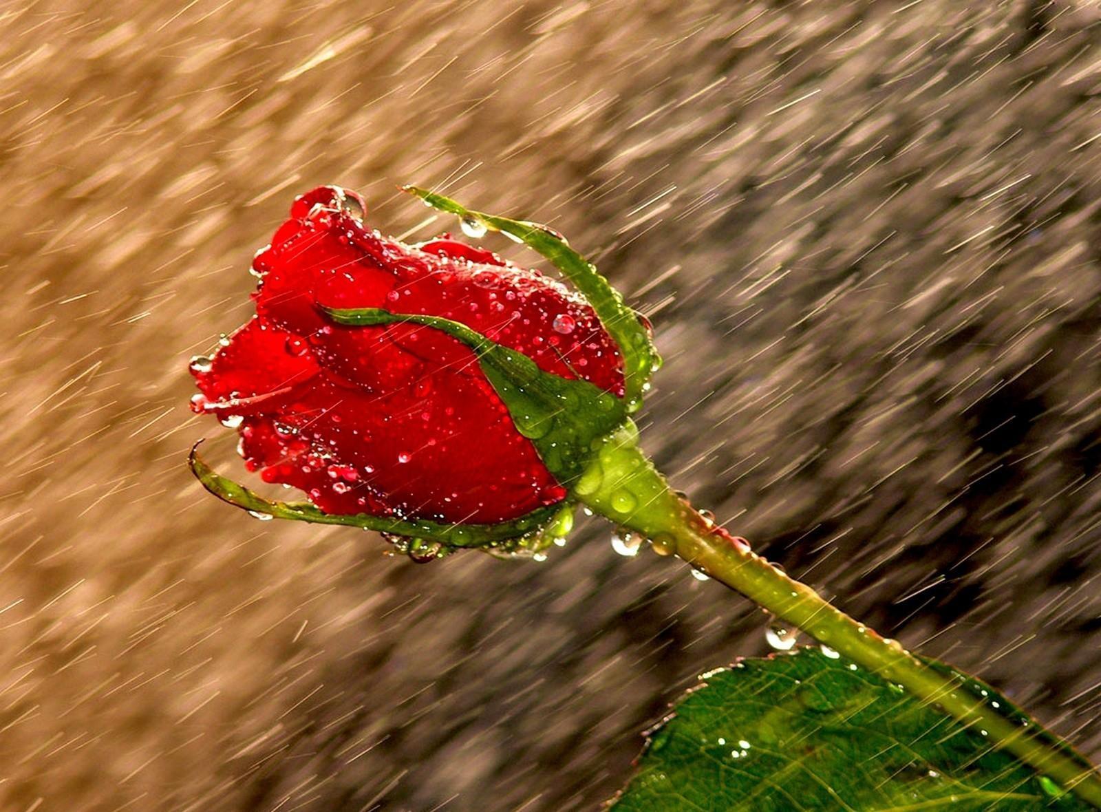 Επιστρέφουν οι βροχές αύριο Δευτέρα 27/4/20 στην χώρα.