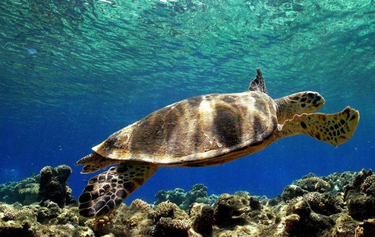Ο 5χρονος που βοήθησε 3 θαλάσσιες χελώνες να επιστρέψουν στον ωκεανό(βίντεο).