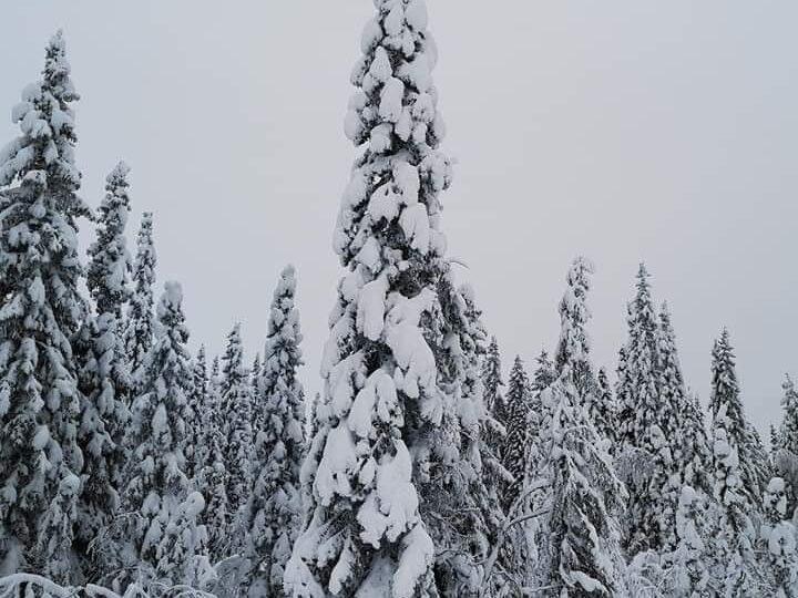 Χιονισμένες εικόνες από Γαλλία 29-12-2020