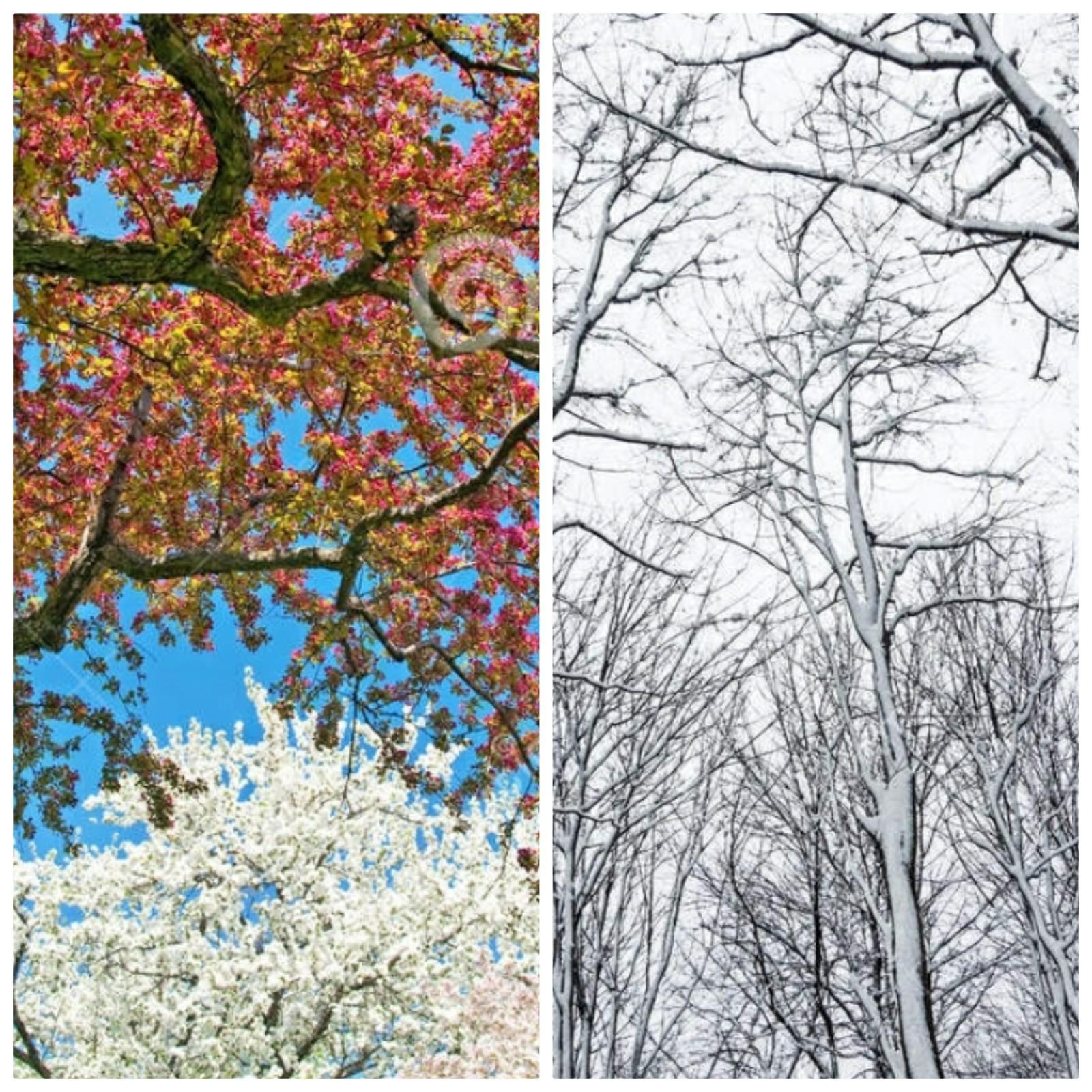 Από την προχωρημένη Άνοιξη στον βαθύ χειμώνα ξανά; Προσέγγιση μεσοπρόθεσμης τάσης 1ου δεκαπενθημέρου Φεβρουαρίου.