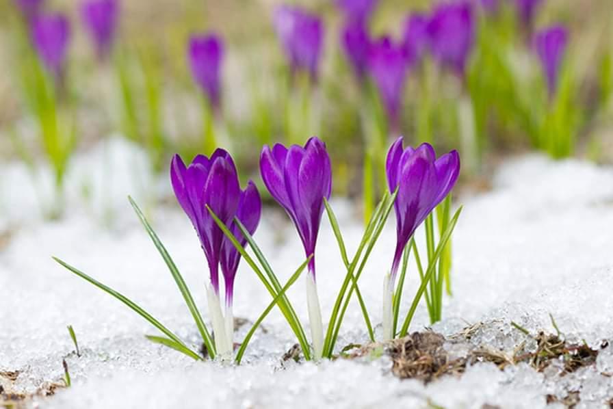 Νεότερη μεσοπρόθεσμη εκτίμηση καιρού. Τυπικός καιρός με Άνοιξη και λίγο από Χειμώνα.